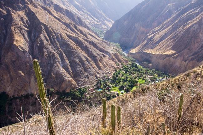 Trekking w Kanionie Colca