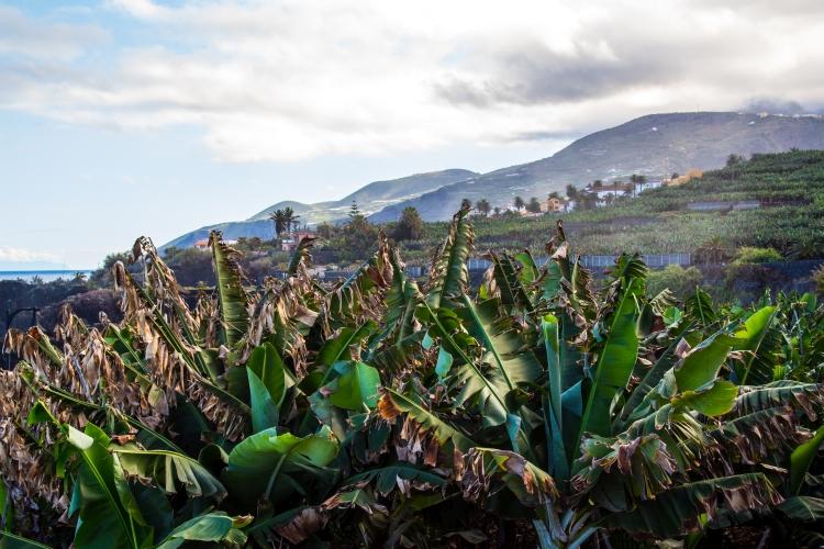 La Palma – wycieczka dookoła wyspy